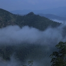 高山云雾出好茶